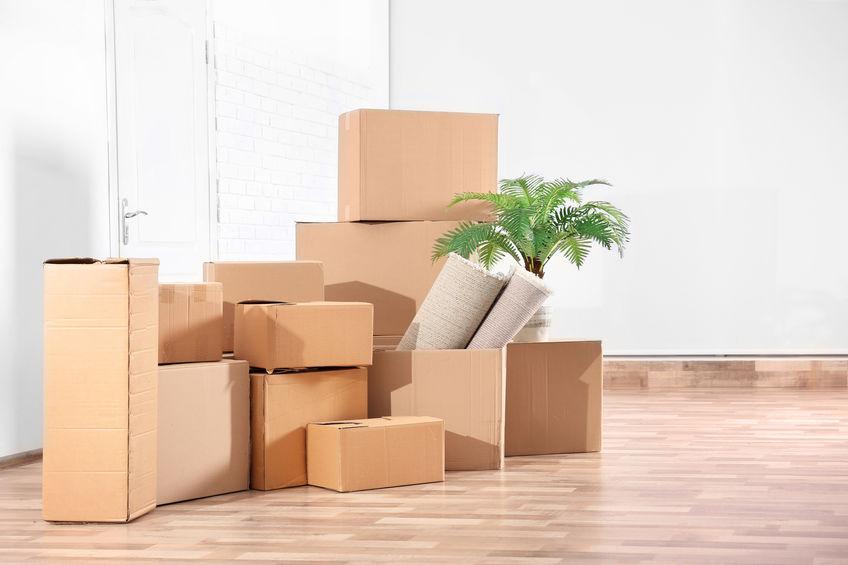 la préparation des plantes pour un déménagement